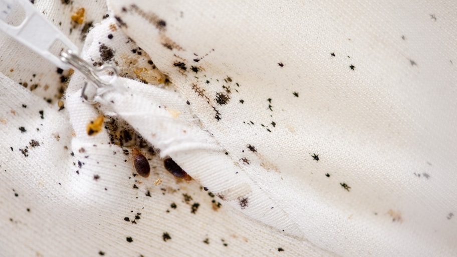 Bed Bugs 101: Finding The Signs And Calling A Pest Control Service!